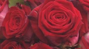 Bild_Valentinstag